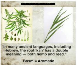 Image result for kaneh-bosm